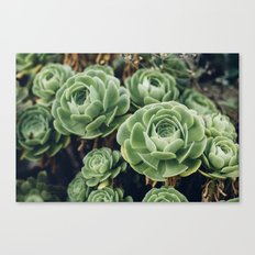 Succulent - Part II Canvas Print