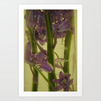 bluebells in water Art Print
