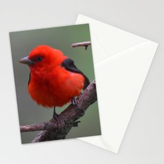 Scarlet Tanager - A Nature Art Print Stationery Cards