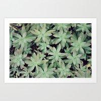 Succulent Abstract Art Print