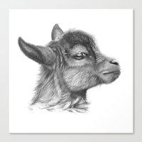 Goat Baby G099 Canvas Print