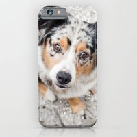 Australian Shepherd iPhone 6 Slim Case