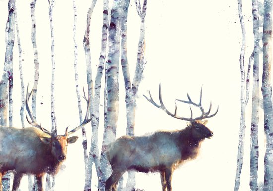 Elk // Follow Canvas Print