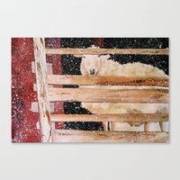 virgin wool Canvas Print