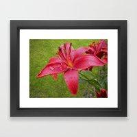 A Lily For Iris Framed Art Print