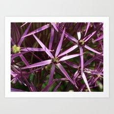Purple star alium Art Print