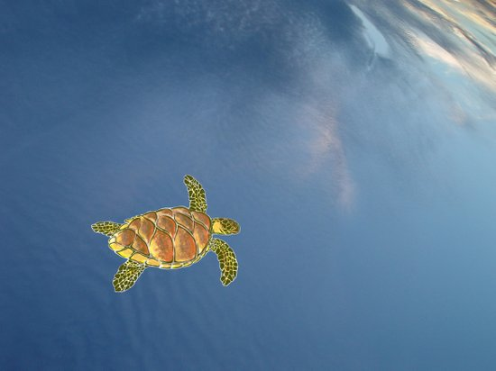 hawksbill swimming in the sky Art Print