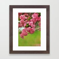 Cherry Orchard Framed Art Print