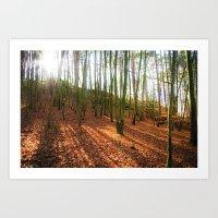 Autumn Sun And Shadows Art Print