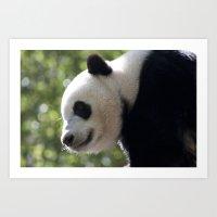 Panda Bear Art Print