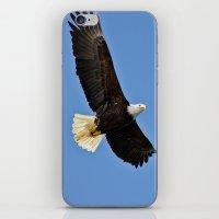 Freedom Eagle (color) iPhone & iPod Skin