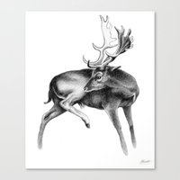 Fallow Deer Stag Canvas Print