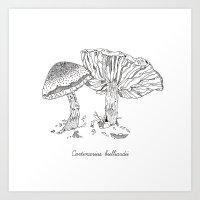 Cortinarius Bulliardii /… Art Print