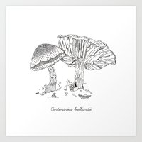 Cortinarius Bulliardii /… Art Print