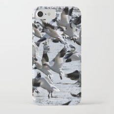 Oie des neiges - Snow Goose - ganso blanco Slim Case iPhone 7