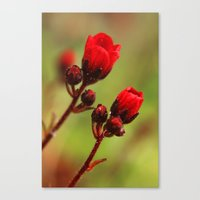 Two (red) Canvas Print