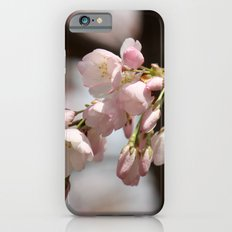 Festina Lente iPhone 6 Slim Case