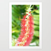 Red Tropical Mystery Flo… Art Print