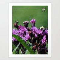 Violet Flowers Bee Photo… Art Print