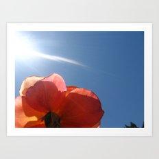 Translucent Rose III Art Print