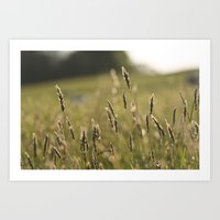 Meadow (Colour) Art Print