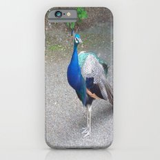 Peacock Suit iPhone 6 Slim Case