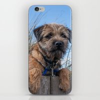 Young Border Terrier Dog With Ball On The Beach iPhone & iPod Skin