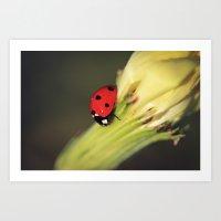 Vibrant Ladybird Art Print