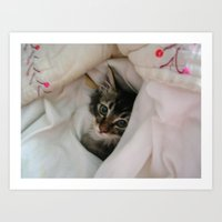 Kitten in Covers Art Print