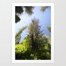 Hidden Forest Art Print