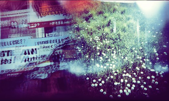 Holga Flowers V Art Print