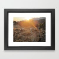 Sheep in the sun Framed Art Print