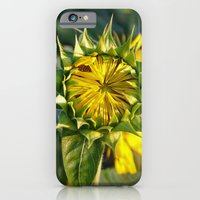 Sunflower Fields Forever - No. 4 iPhone 6 Slim Case