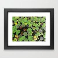 Lilipads Framed Art Print
