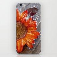 iPhone & iPod Skin featuring Orange Sunflower On Wood by Regan's World
