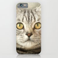 iPhone & iPod Case featuring Tabby Cat by Pauline Fowler ( Polly470 )