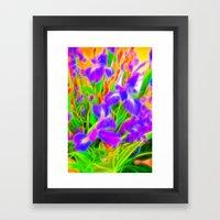 Iris Afterglow Framed Art Print