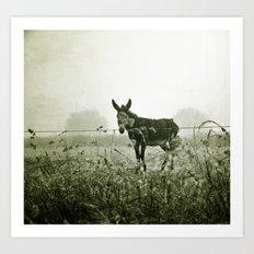 le regard de l'âne Art Print
