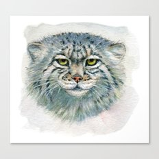 Pallas's cat 862 Canvas Print