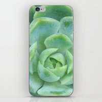 Succulent Harmony iPhone & iPod Skin