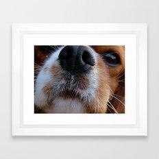 Nosey Dog Framed Art Print