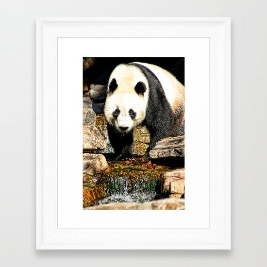 Wang Wang Framed Art Print