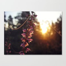 Waterdrops on heather Canvas Print