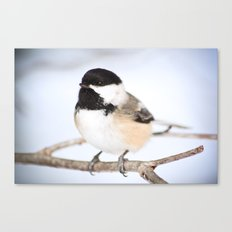 Up Close With A Chickadee Canvas Print