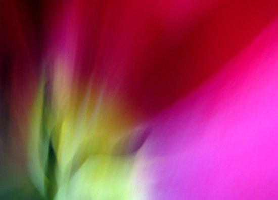 Tulip Sunrise Art Print