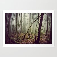 Out In The Woods Today Art Print