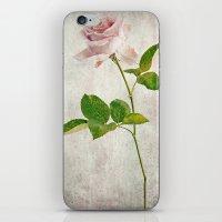 English Tea Rose  iPhone & iPod Skin