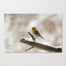 Out On A Limb (American … Canvas Print