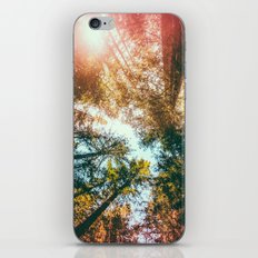 California Redwoods Sun-rays and Sky iPhone & iPod Skin