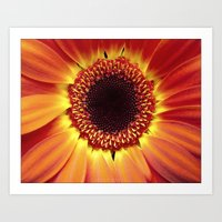 Harvest Sunflower Art Print